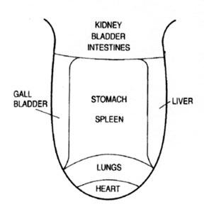 γλωσσα και διαγνωση των οργανων του σωματος